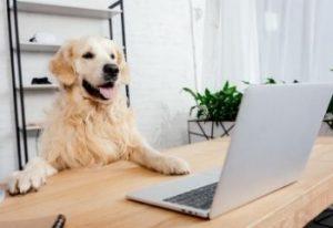 Dog sitting behind computer